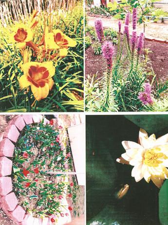 garden pictures-1.jpg