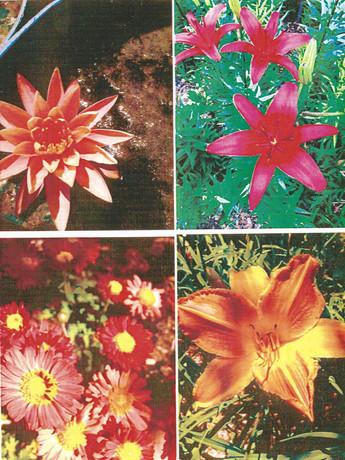 garden pictures-4.jpg