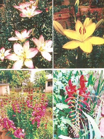 garden pictures-3.jpg