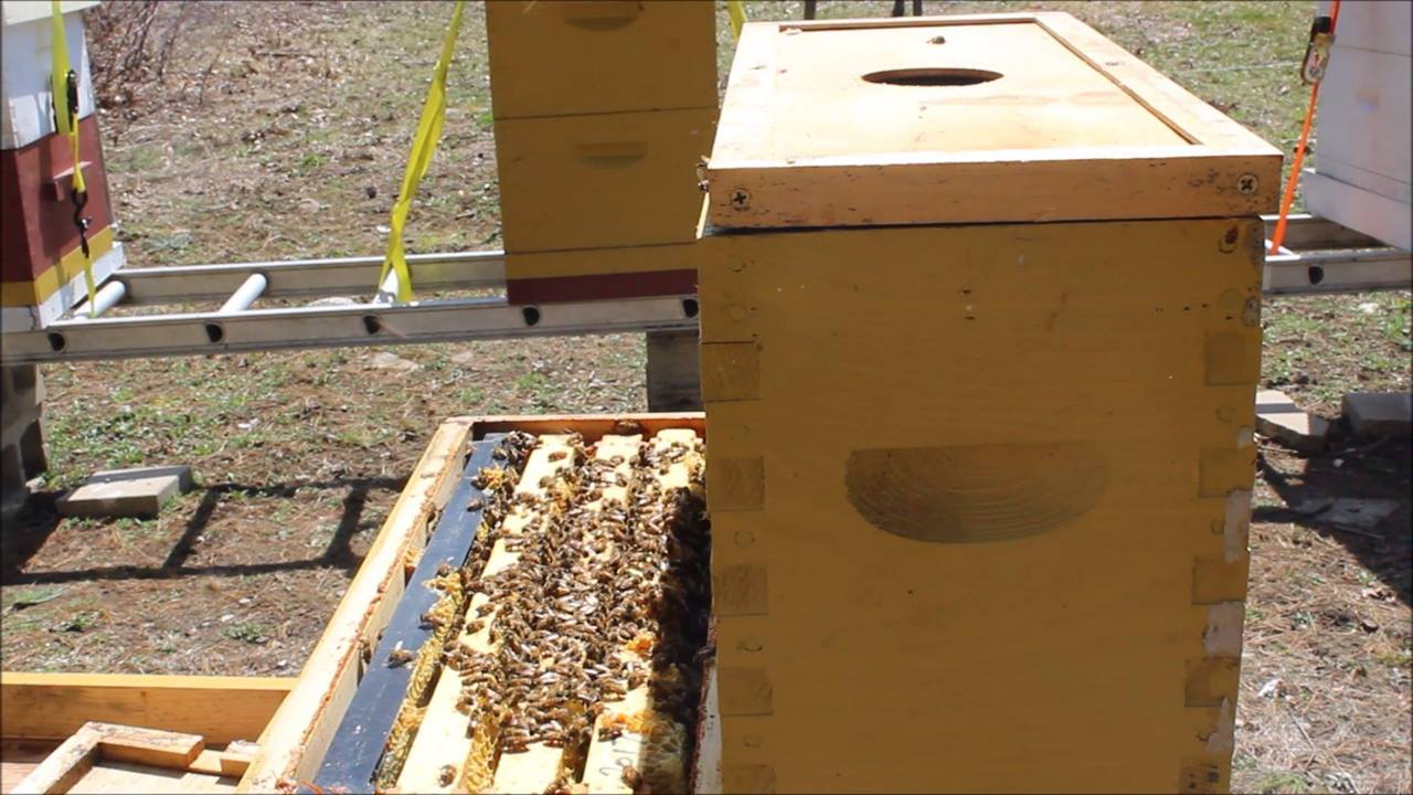 Over-wintered Nucs