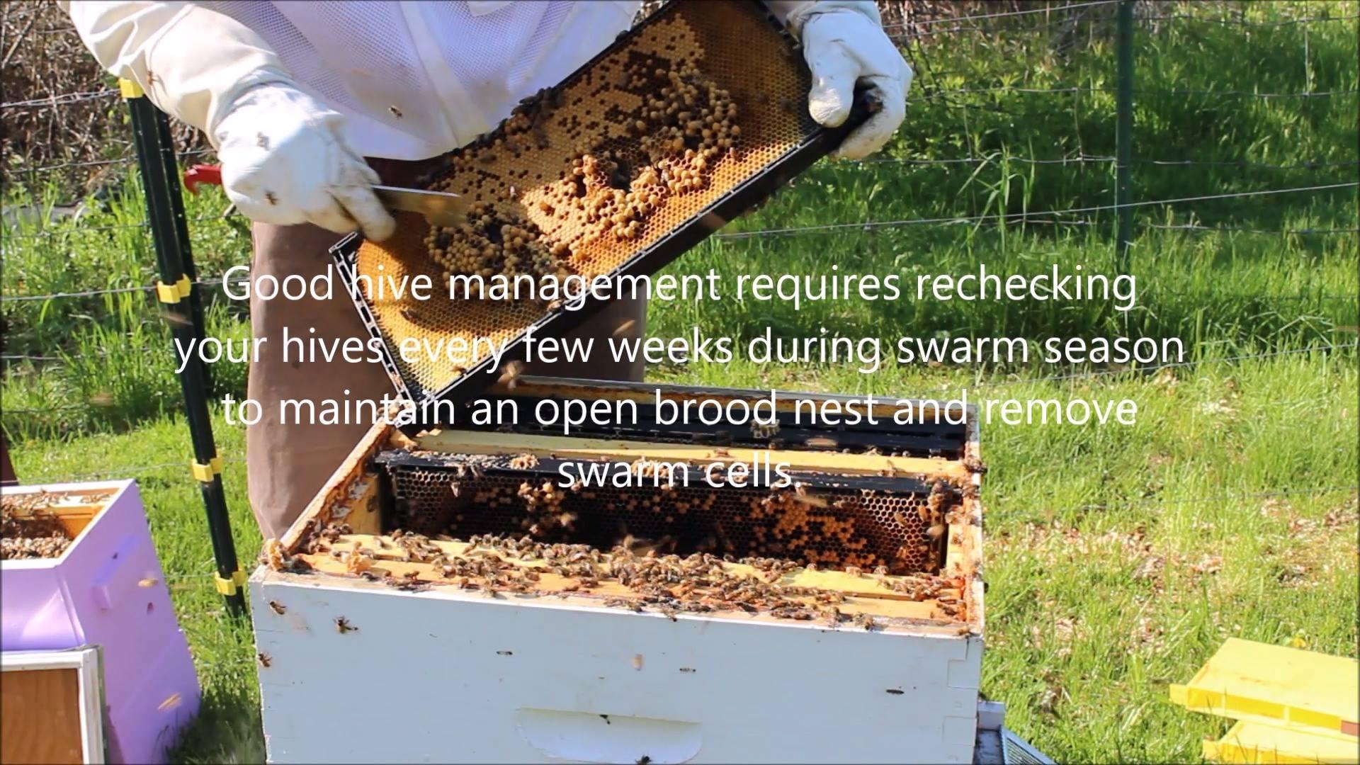 Spring swarm prevention