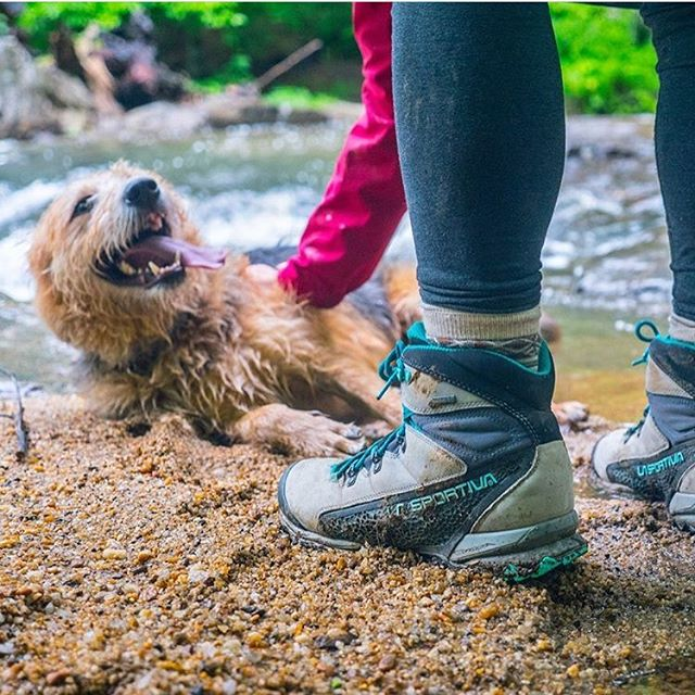 Hope a weekend day was dedicated to a hike with a pup