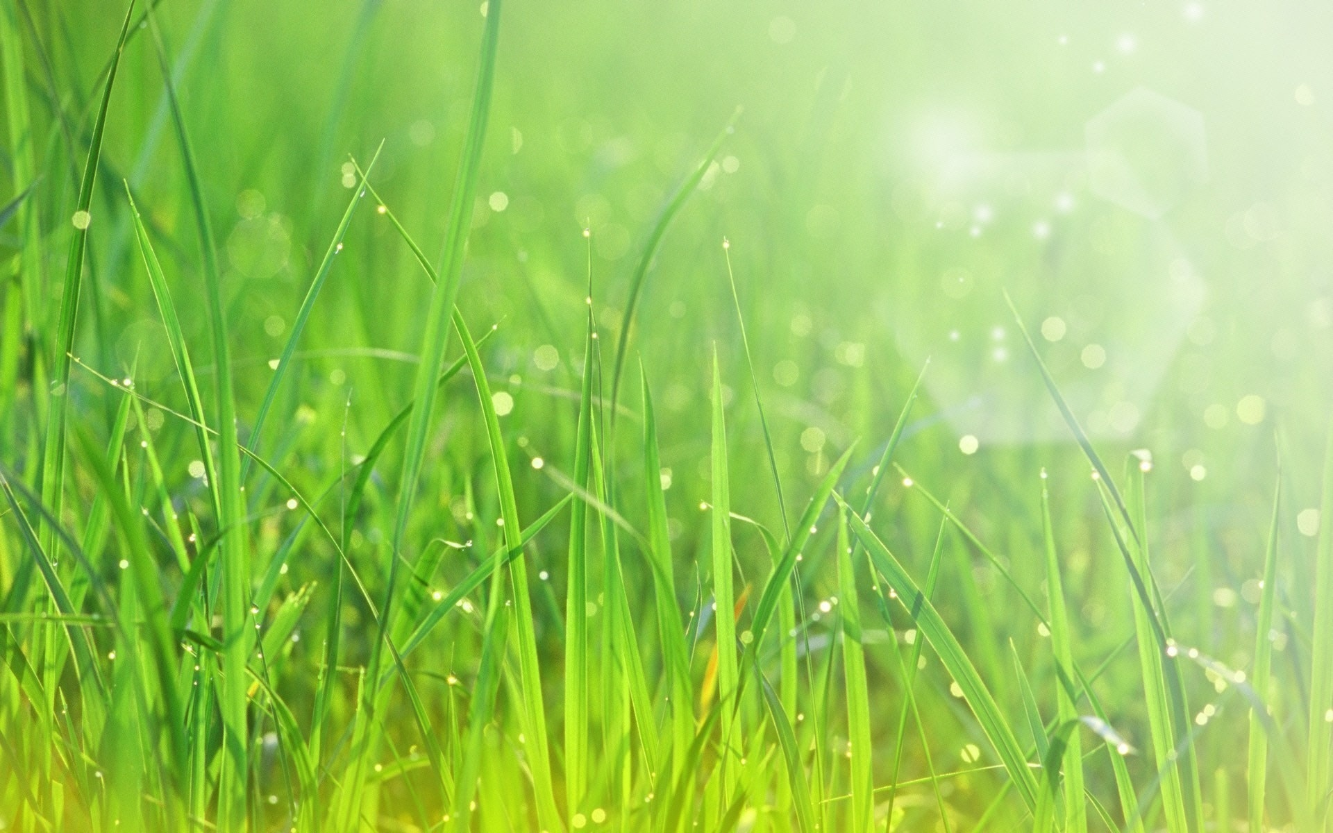 822804-grass-wallpaper