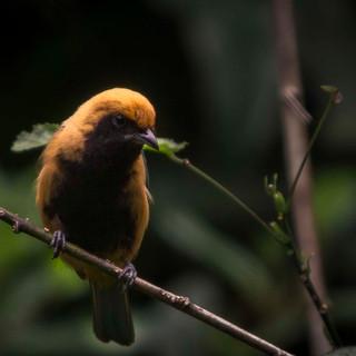 Pássaro na Serra dos Órgãos 4