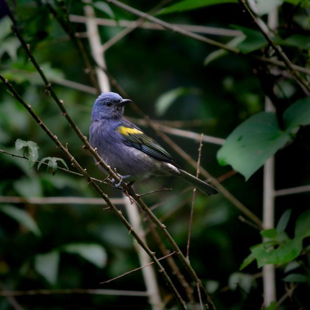 Pássaro na Serra dos Órgãos 3