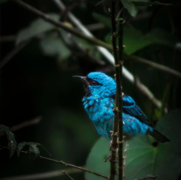 Pássaro na Serra dos Órgãos 2