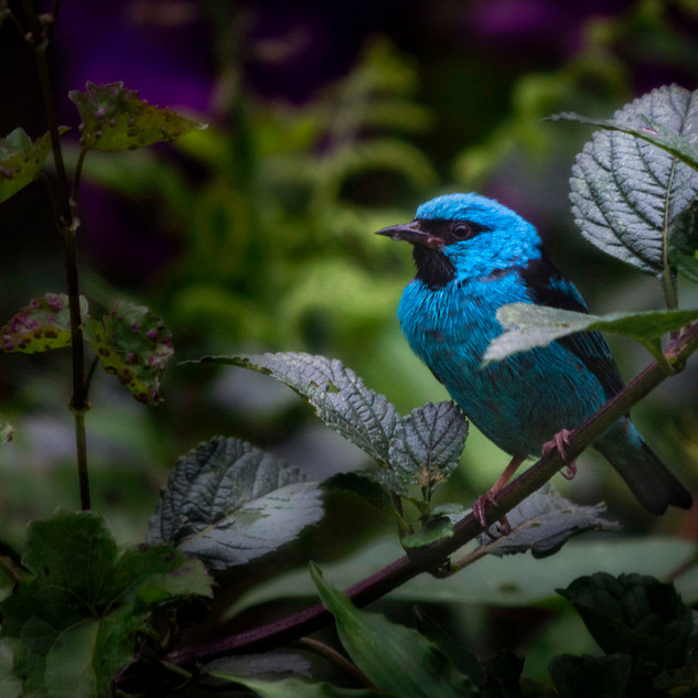 Pássaro na Serra dos Órgãos 1