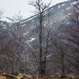 Árvore no Sendero à Laguna Torre