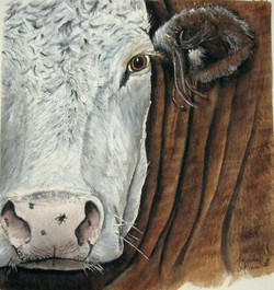 close up cow.jpg