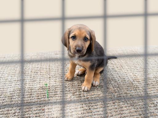 La lutte contre la maltraitance animale