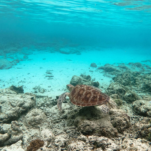 Unterwasserwelt erkunden