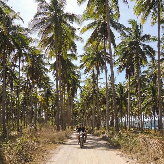 Mit dem Motorrad durch Palmenfelder