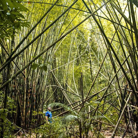 Durch Dschungel wandern