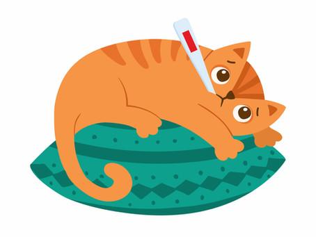 Le sida des chats, qu'est-ce que c'est ?