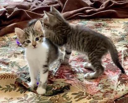 Aria & Cookie