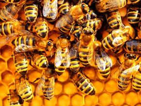 Lamorinda Bee Project