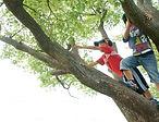 子ども写真 木登り.jpg