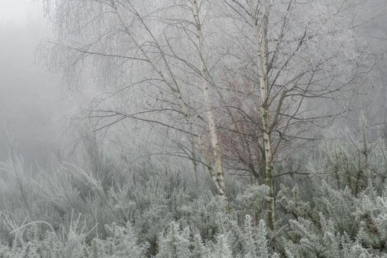 Frozen & Bare