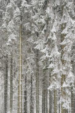 Snowy Drapes