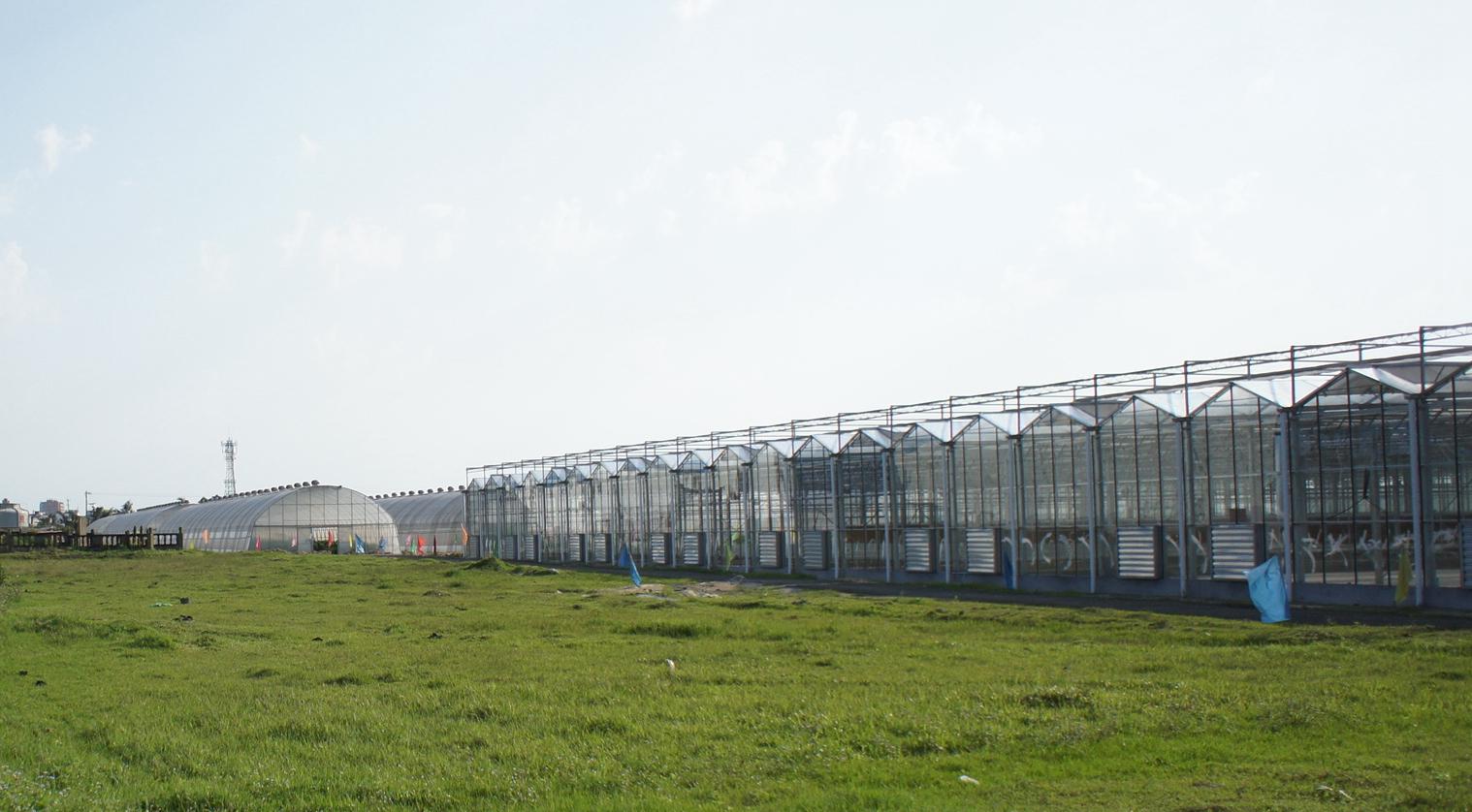 Venlo Greenhouse 7