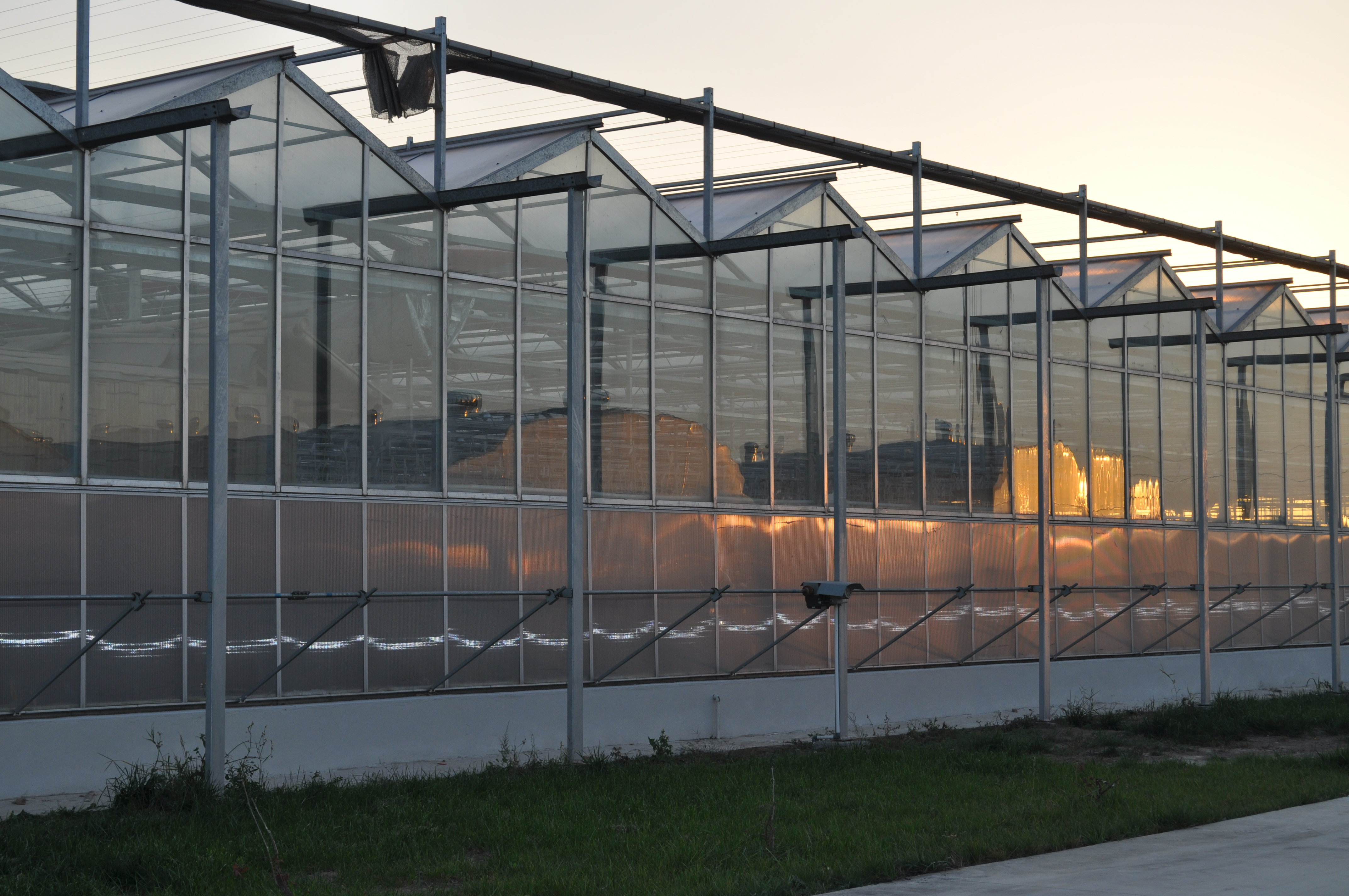 Venlo Greenhouse 2