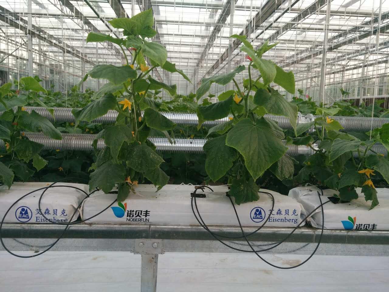 Venlo Greenhouse 9