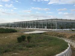 Venlo Greenhouse 1