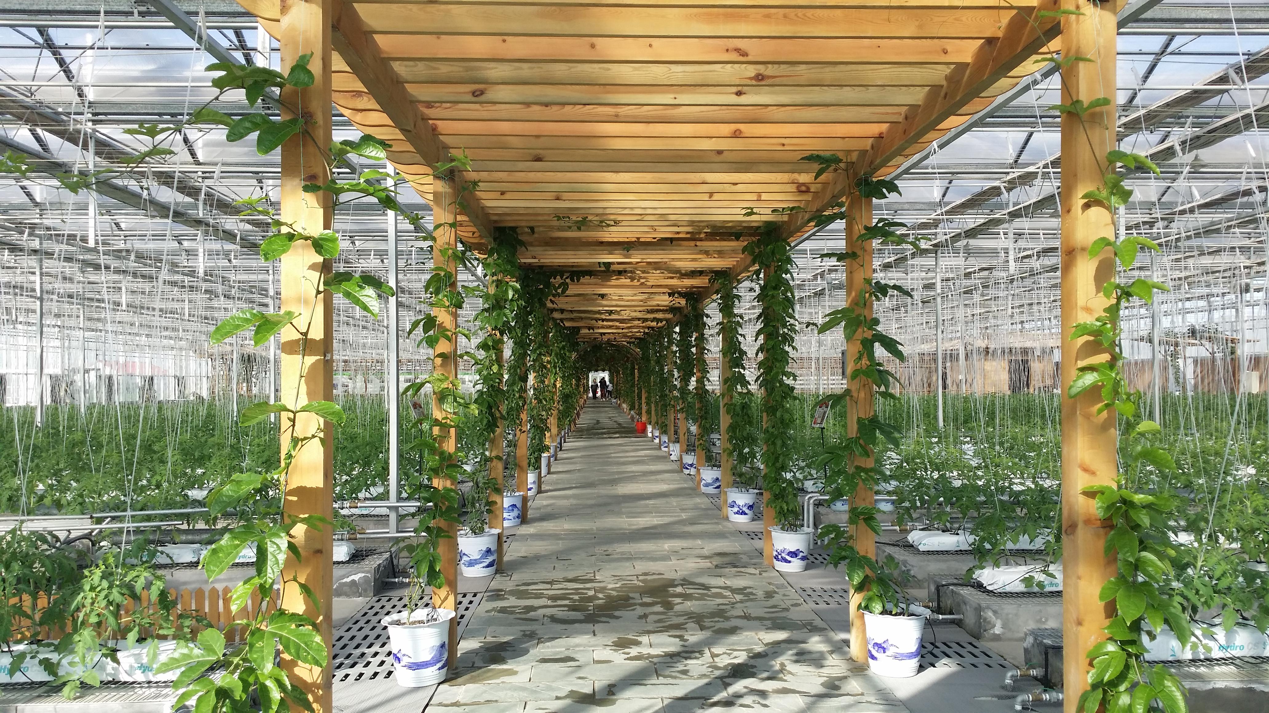 Venlo Greenhouse 3