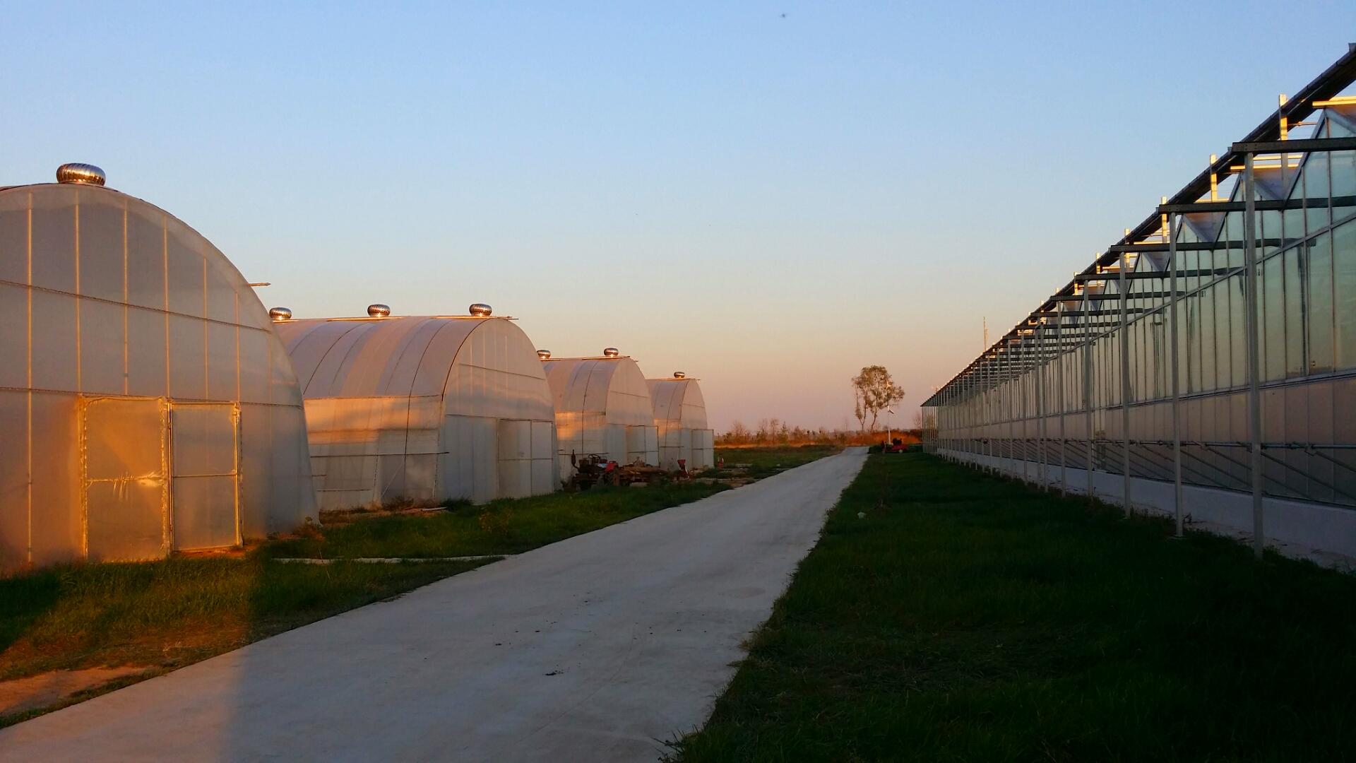 Venlo Greenhouse 8