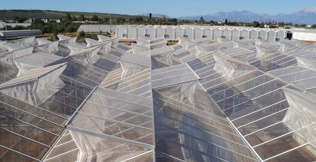 Venlo Greenhouse 6
