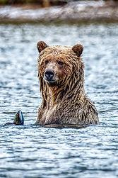 Bear Dinner.jpg