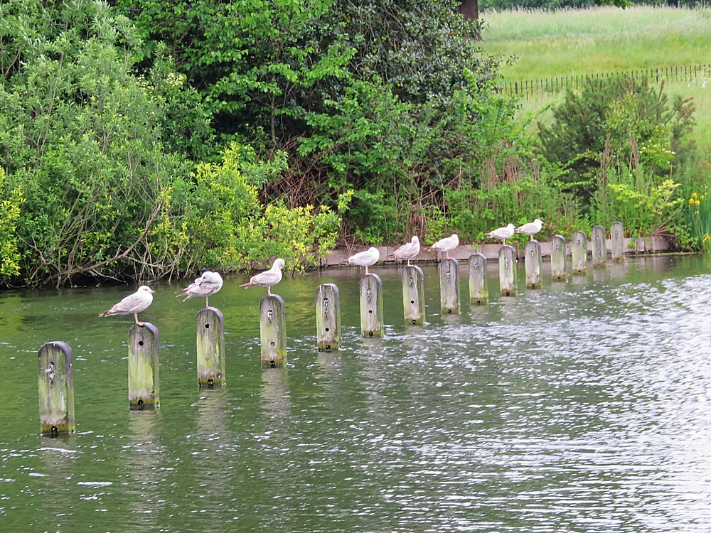 Birds in Hyde Park, London, England