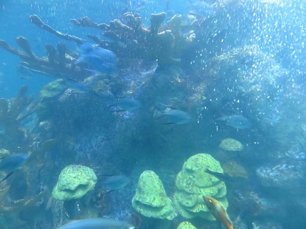New England Aquarium, Boston