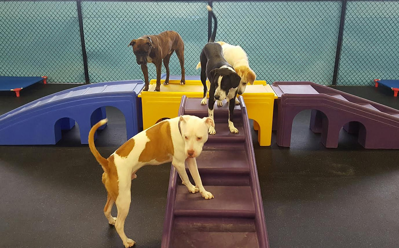 Dog daycare the colony dog daycare frisco dog daycare plano turco gozer tux on bridge solutioingenieria Image collections