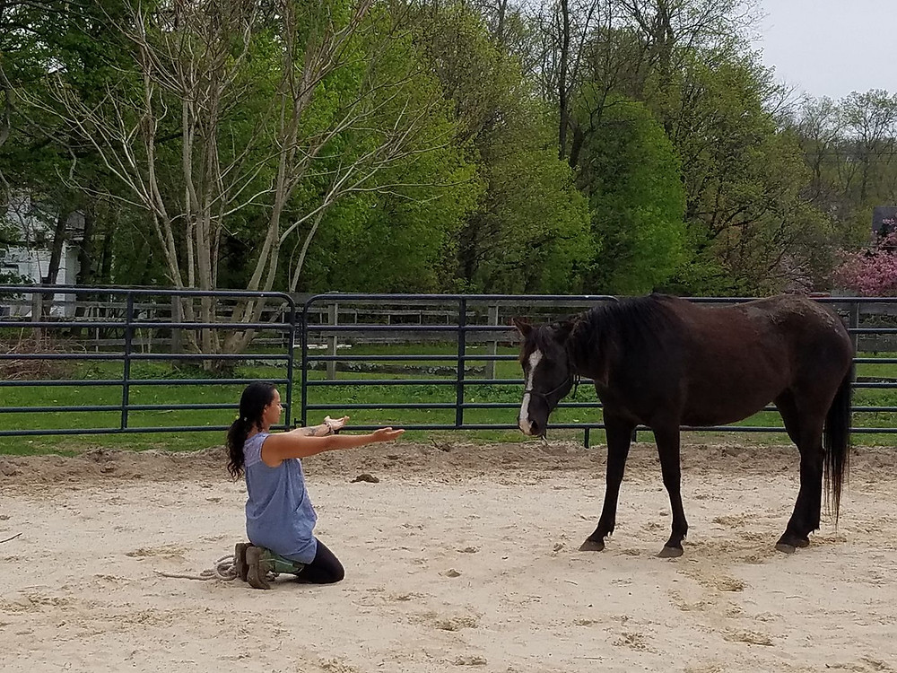 The Unbridled Heroes Project works with horses