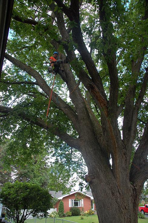 Boucherville arbres élagage abattage