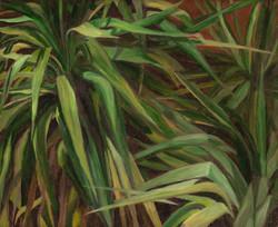 Yuccas 3