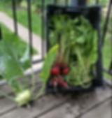 produce cropped.JPG