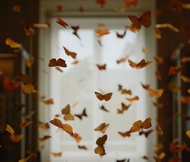 Il peso della farfalla.png