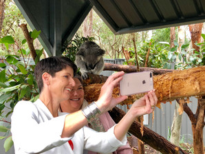 Koala Sanctuary Stage One Complete