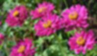 Sunshine Coast Garden Centre, Sunshine Coast Nursery, Sunshine Coast Plants, Little Mountain Produce