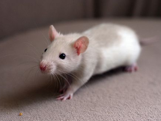 What is the best first pet for my child?