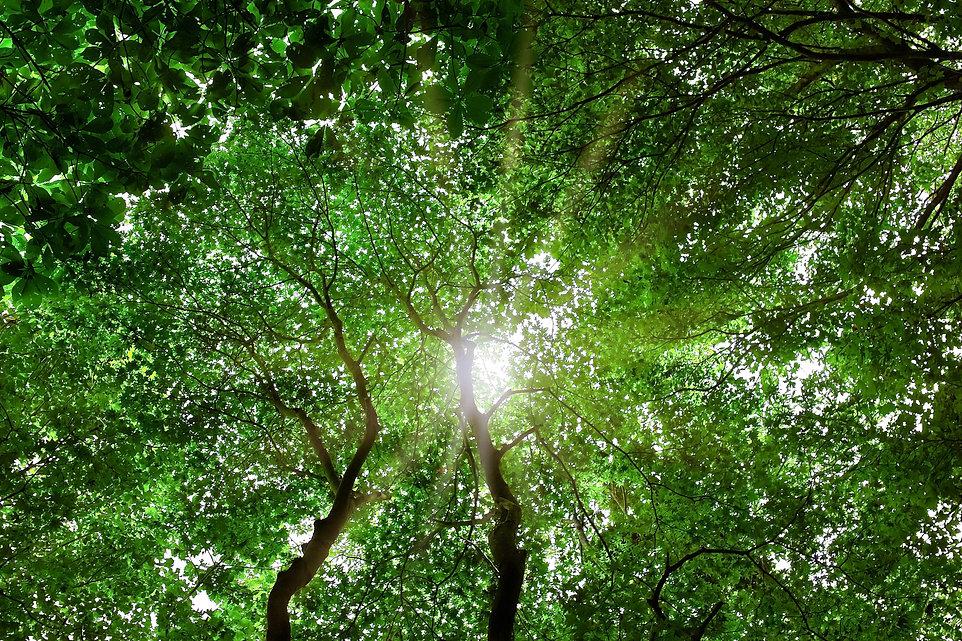 tree-woods_00005.jpg