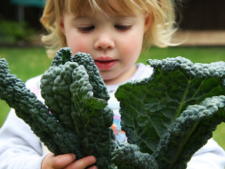 Why do your Kids need Vitamin K and where do you find it?