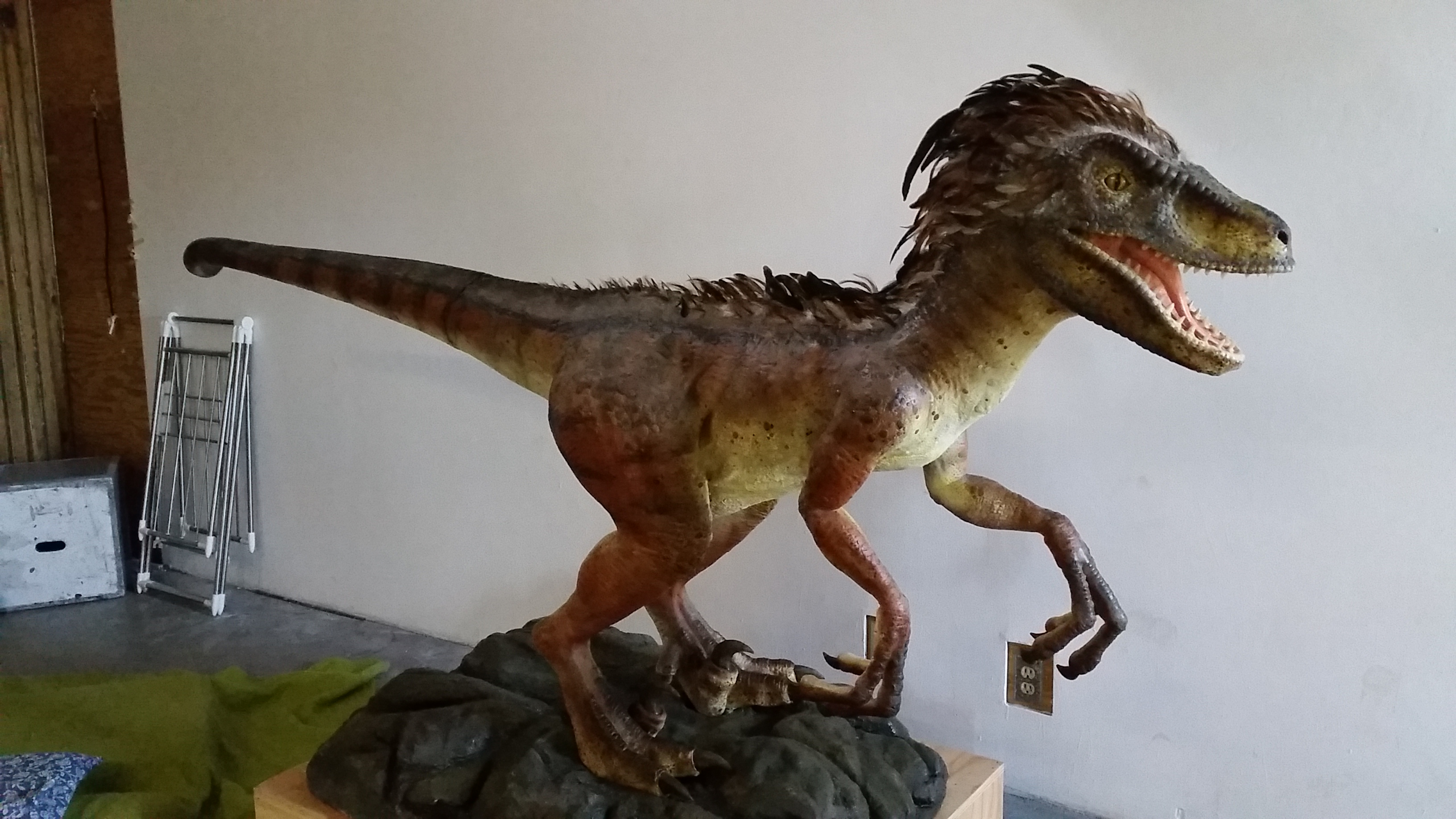 Life-size Velociraptor