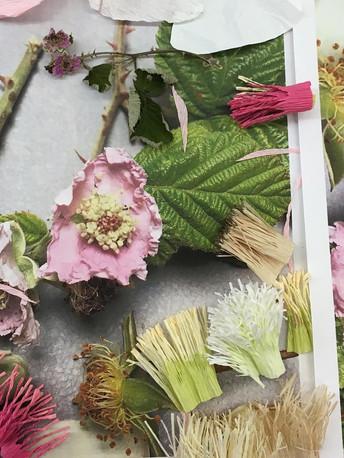 Bramble blossom photographs