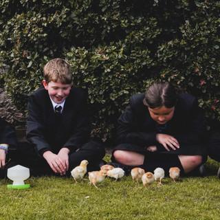 190407 Chicks - SDC-31.jpg