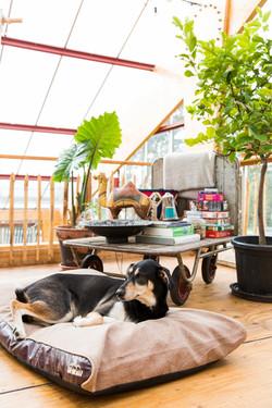 Henny Eco Dreamhouse