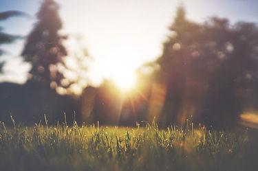 Grass Photo.jpeg