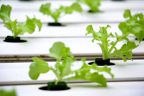 hydroponics-4447704_1920.jpg